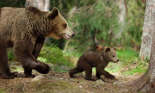 Il faut sauver l'ours Cannellito