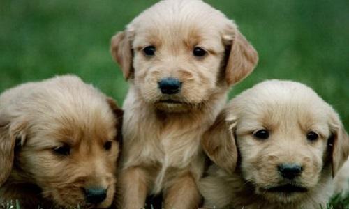 Que cesse la vente d'animaux de compagnie par des particuliers !
