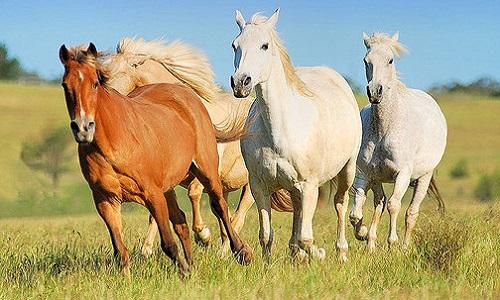 Arrêtez de manger des chevaux