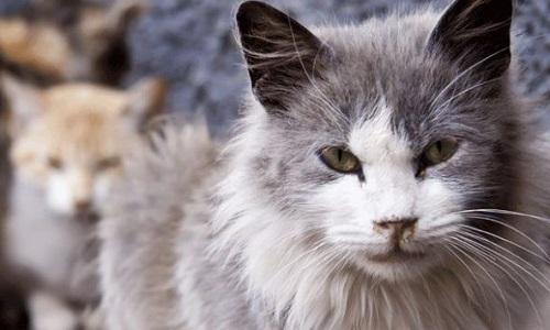 L'aide de la SPA aux associations pour chats errants sans arrêté Municipal !