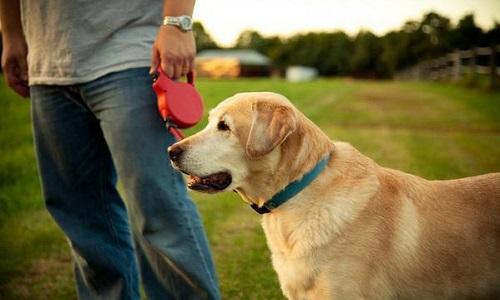 Un vrai permis ''chien'' obligatoire pour toutes les races de chiens