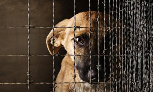 Plus de réactivité pour sauver les animaux maltraités