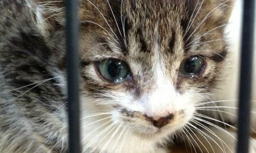 Une loi contre la maltraitance des animaux
