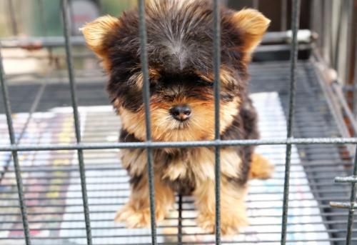 Interdiction de vendre des animaux dans les magasins
