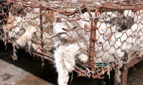 Pour l'arrêt définitif du festival Yulin