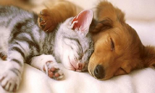 Pétition : Non à la maltraitance d'un chien ou chat