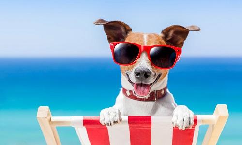 Pour que nos animaux soient tous mieux accueillis sur nos lieux de vacances !