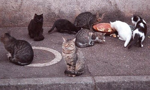 Sauvons les chats errants