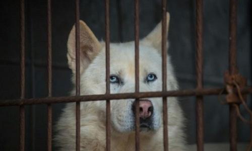 Pétition : Sauver les chiens : boycott des produits sud Coréens