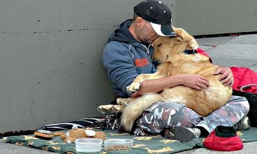 Retrait de la pétition : surveiller / limiter les chiens de SDF sur le site MesOpinions.com