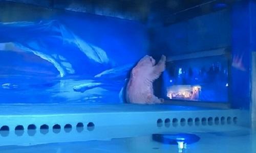 Sauver les animaux d'un centre commercial à Canton en Chine : Grandview Aquarium Zoo