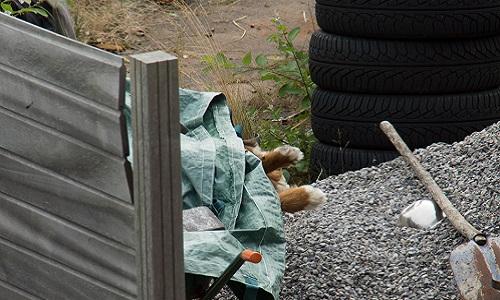 Justice pour la mise à mort par empoisonnement de Mougli, chien Bouvier Bernois, victime de la barbarie de mon voisin