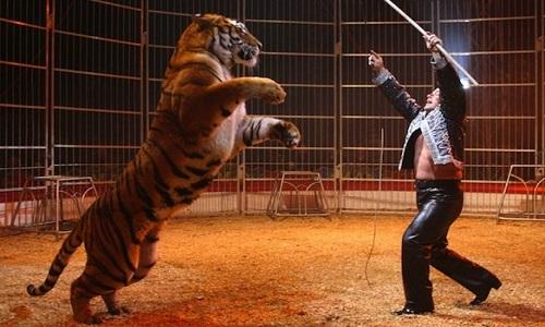 Interdiction des cirques avec animaux sur la commune d'Annonay
