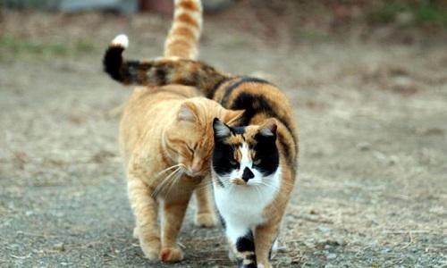 Stop à l'extermination illégale des chats de Montech par les services municipaux
