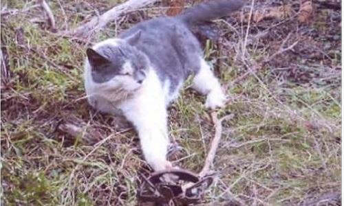 Arrestation des assassins du groupe Cat Busters