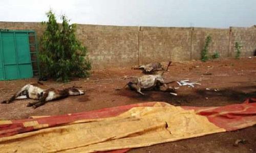 Pétition : L'arrêt immédiat du génocide des ânes