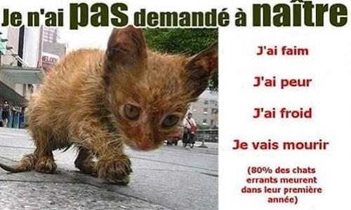 La mise en place d'une campagne de stérilisation pour les chats errants