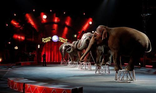 Pour l'interdiction des cirques avec animaux à Dijon