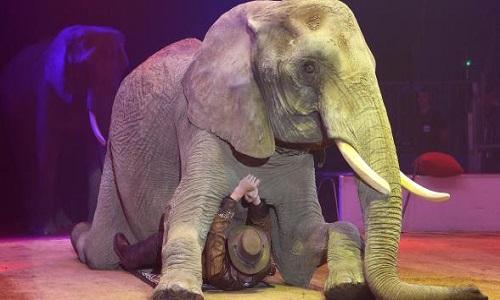 Refusons tous les cirques avec animaux sur notre commune