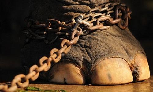 Ne plus accueillir de cirques avec animaux