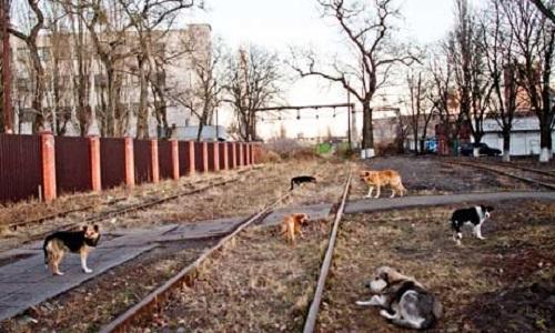 Une interdiction de l'association des Dog-Hunters en Ukraine