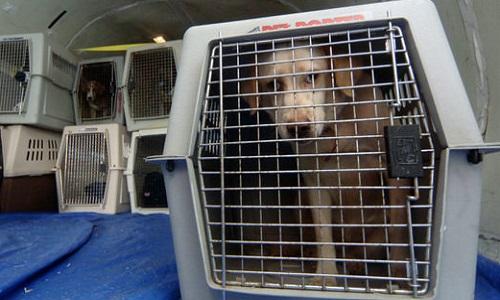 Pour l'interdiction de faire voyager les animaux en soute dans les avions