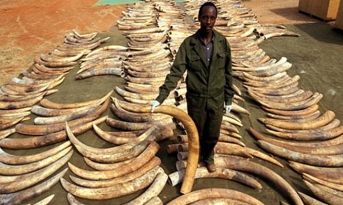 Ensemble contre le braconnage d'ivoire !