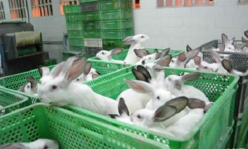 Sauvez les lapins !