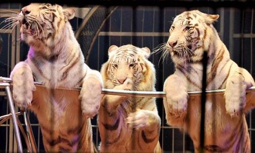 Pour interdire les cirques avec animaux à Besançon