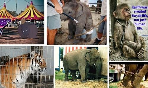 Interdition des cirques avec animaux à La Teste de Buch & Gujan-Mestras