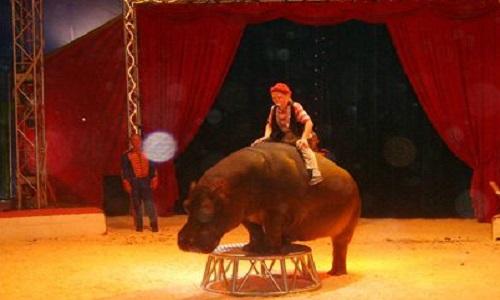 Pas de cirque avec animaux sauvages en région PACA