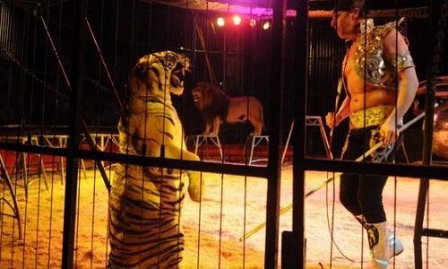 Non au cirque avec animaux sur la commune d'Halluin (59)