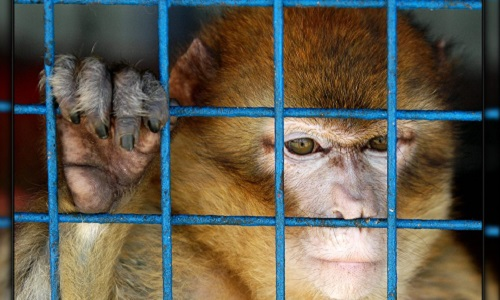 Stop aux cirques qui exploitent les animaux sur la commune de Saint-Sulpice (Tarn 81370)