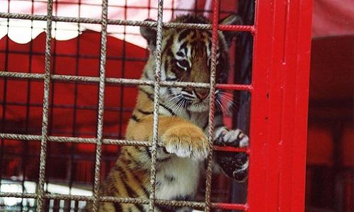 Aider les animaux à ne plus être en cage et retrouver leurs libertés