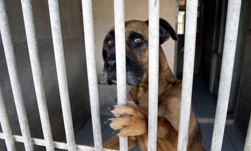 Pétition : Fermeture des fourrières en NC et création de brigades de protection animale !