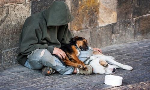 Le sans-abri et son complice (animal)