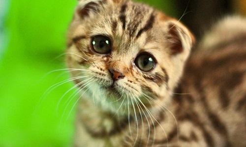 Pétition : Arrêtons les tueurs de chats