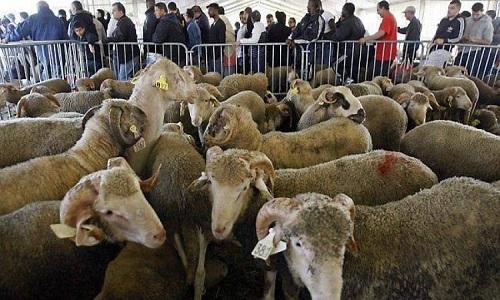 Non à l'abattoir provisoire halal à Belfort ! Non à l'utilisation de nos fonctionnaires pour organiser un rite religieux !
