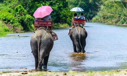 Contre les balades à dos d'éléphant.