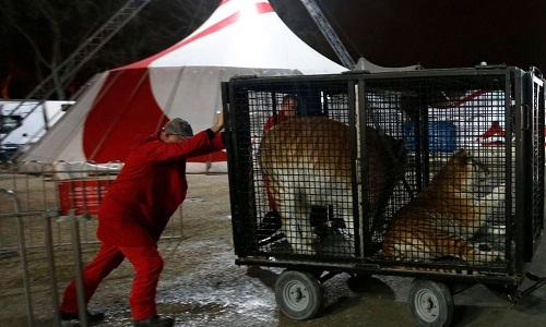 Non aux cirques avec animaux dans notre ville !