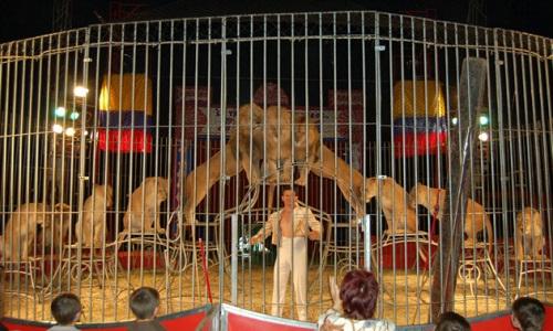 Non au cirque avec animaux à Malakoff