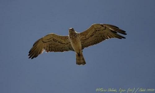 Pour que vive le suivi des oiseaux migrateurs à Eyne (66) !