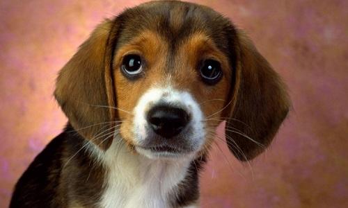 J'adore les bêtes car il faut savoir les aimer, leur télépathie est supérieure à la nôtre.