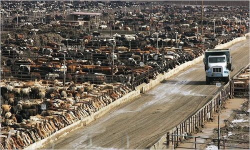 Pétition : Boycottons la viande
