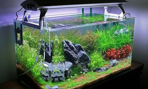Pour la création de plus de clubs aquariophile dans la Drôme