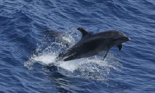 Pour la protection des dauphins