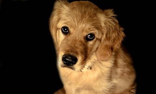 Hommage au chien martyr de St Quentin