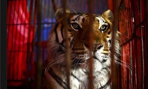 Pétition : Fermeture définitive des cirques avec les animaux maltraitance et souffrance