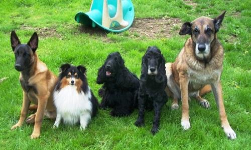 Pour les chiens retraités d'élevage