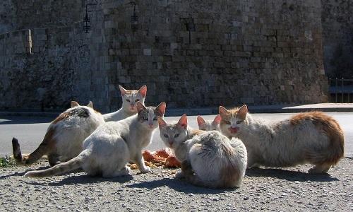 Pour la stérilisation et l'identification des chats errants sur la communes de Verquin